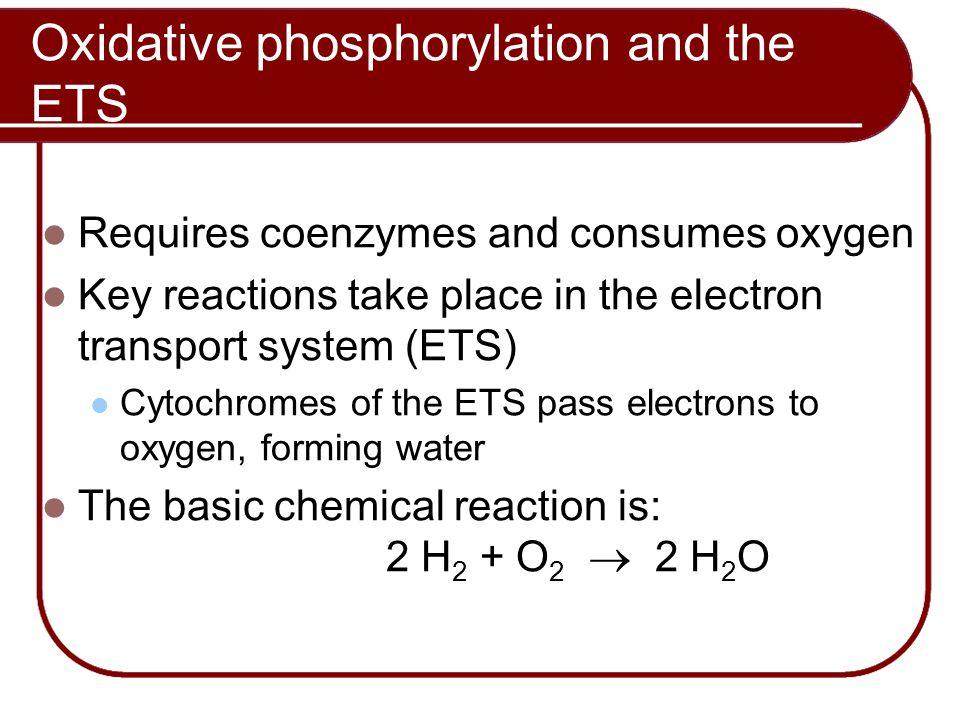 Oxidative phosphorylation and the ETS