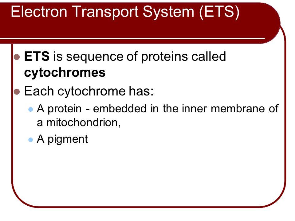 Electron Transport System (ETS)