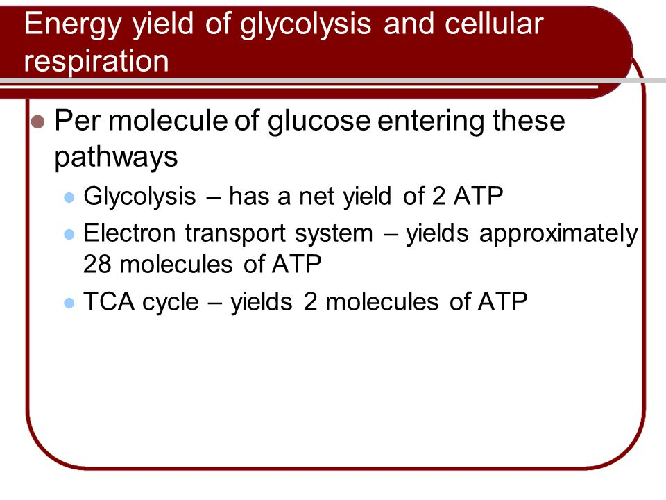 Energy yield of glycolysis and cellular respiration