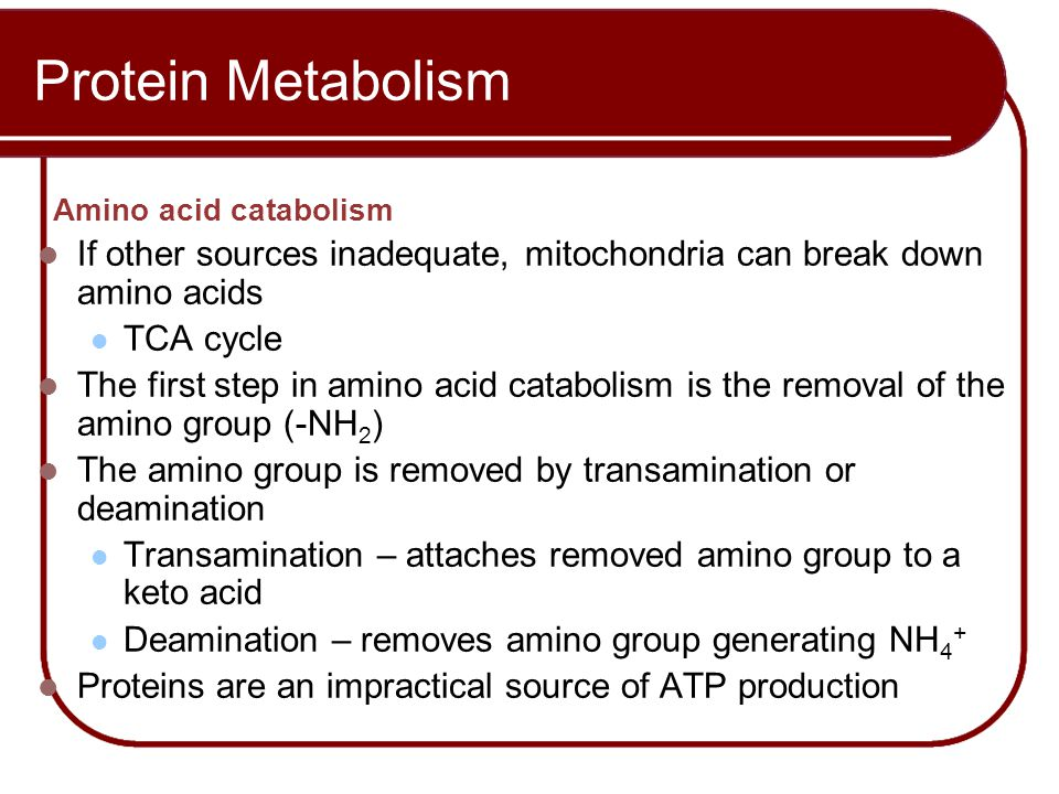 Protein Metabolism Amino acid catabolism
