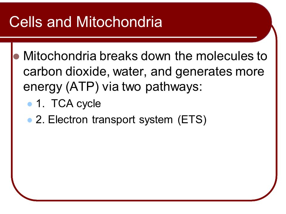 Cells and Mitochondria