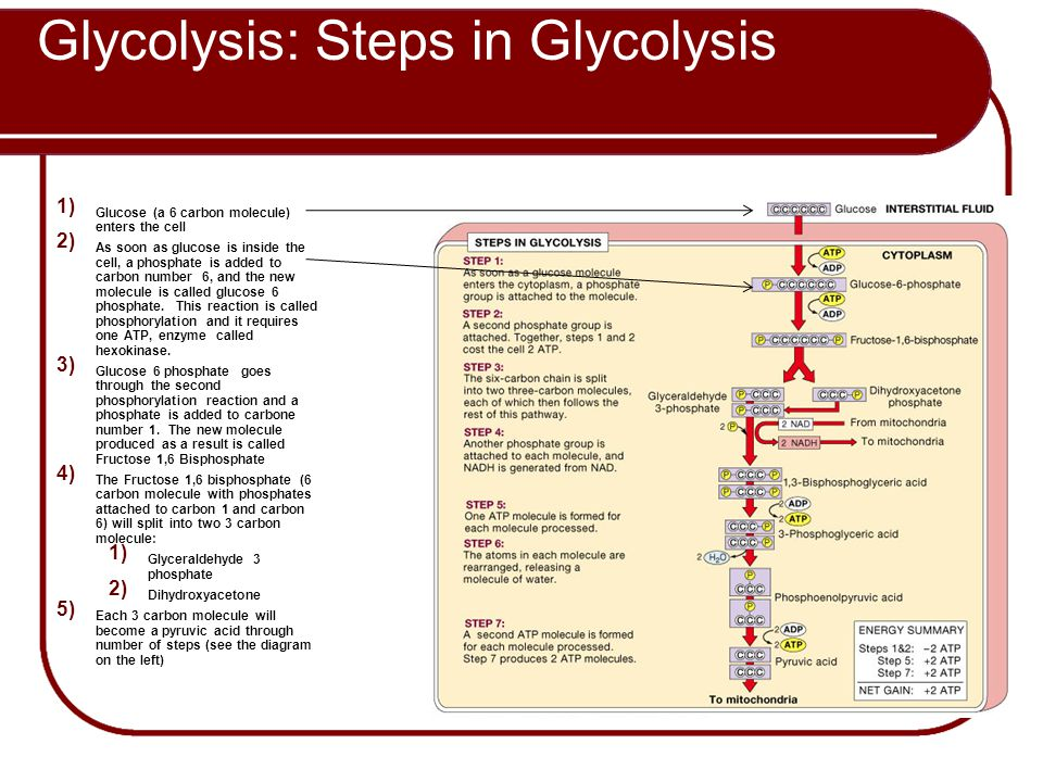 Glycolysis: Steps in Glycolysis
