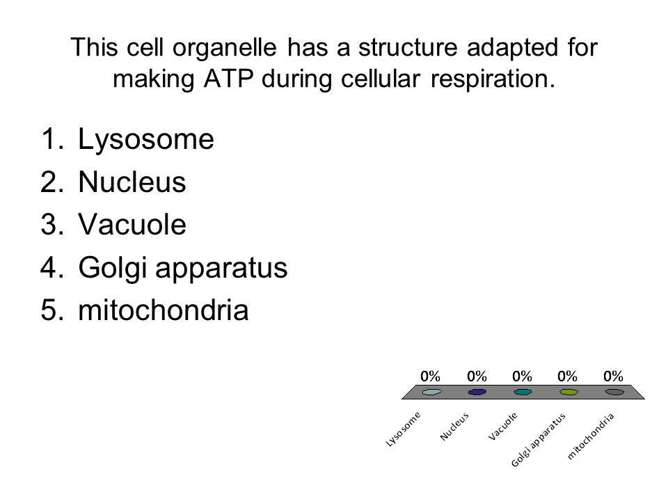 Lysosome Nucleus Vacuole Golgi apparatus mitochondria