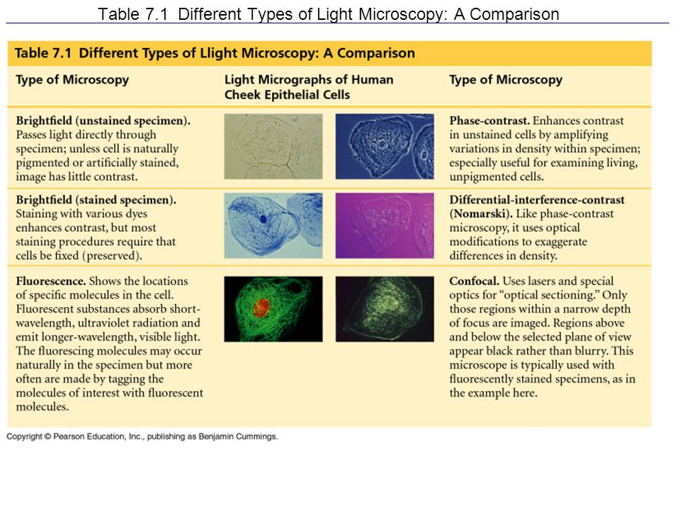 Table 7.1 Different Types of Light Microscopy: A Comparison