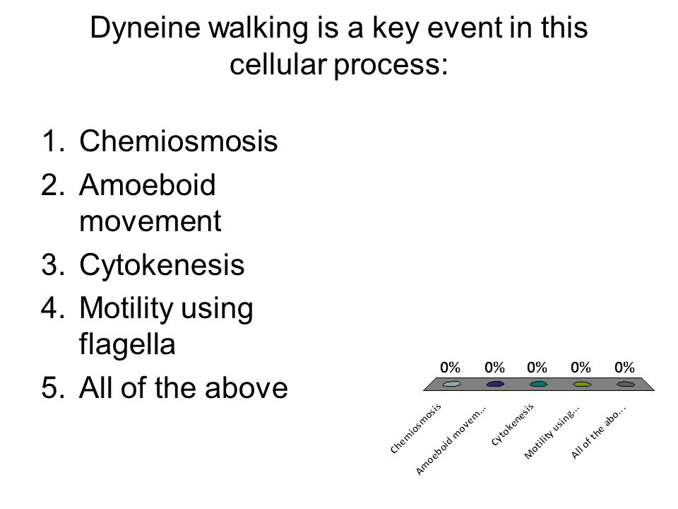 Dyneine walking is a key event in this cellular process: