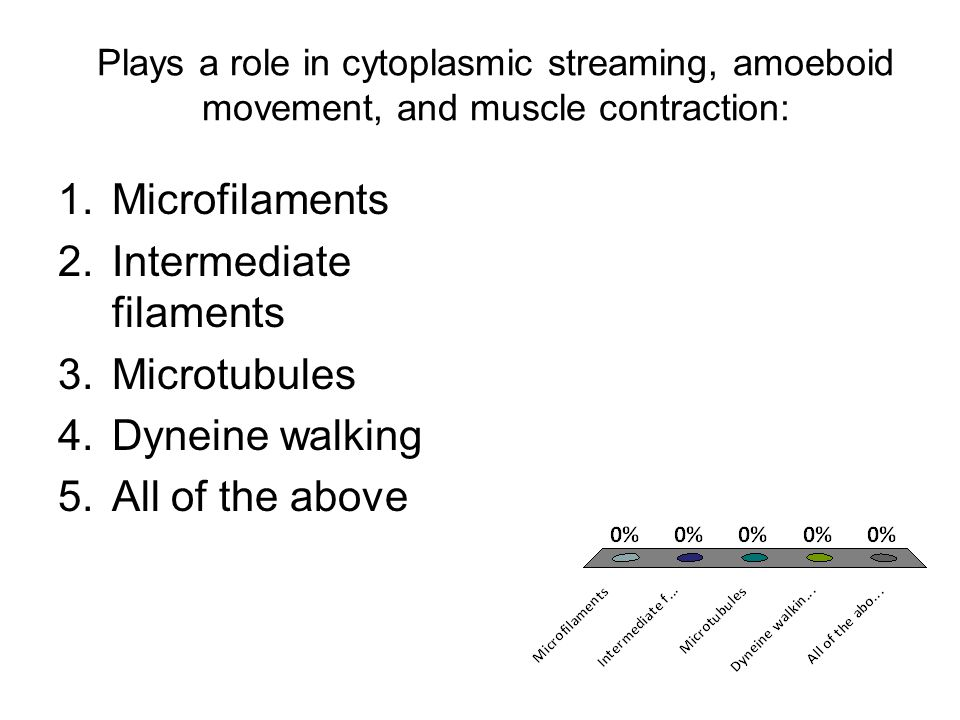 Intermediate filaments Microtubules Dyneine walking All of the above