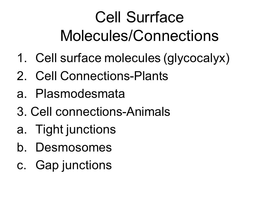 Cell Surrface Molecules/Connections
