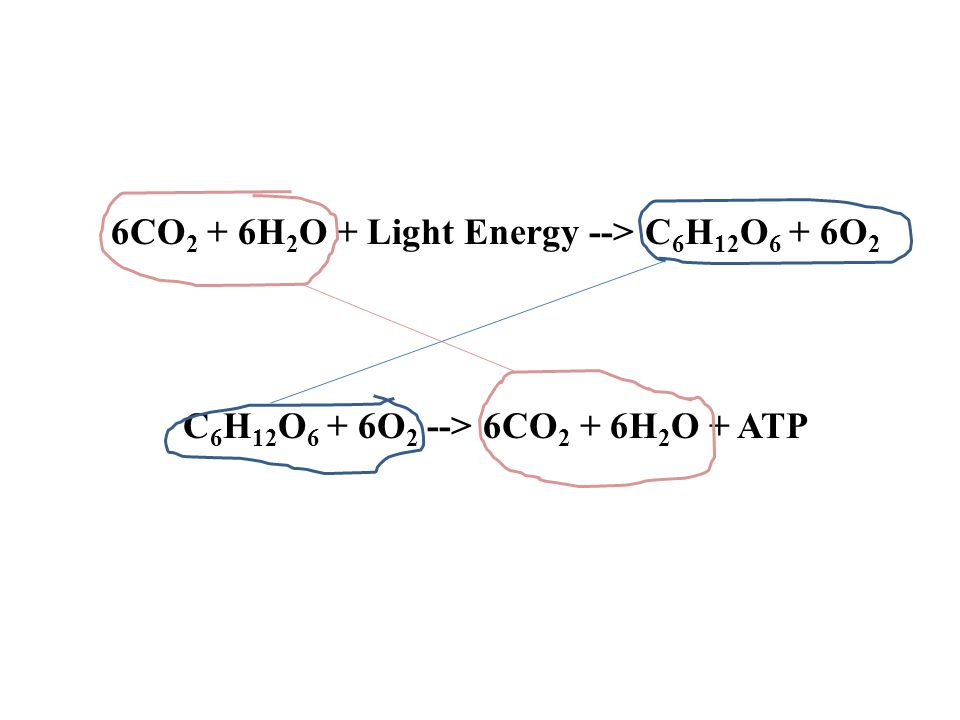 6CO2 + 6H2O + Light Energy --> C6H12O6 + 6O2