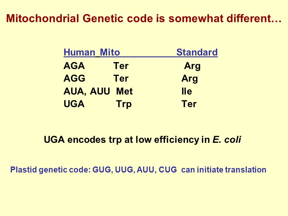 Mitochondrial Genetic code is somewhat different…