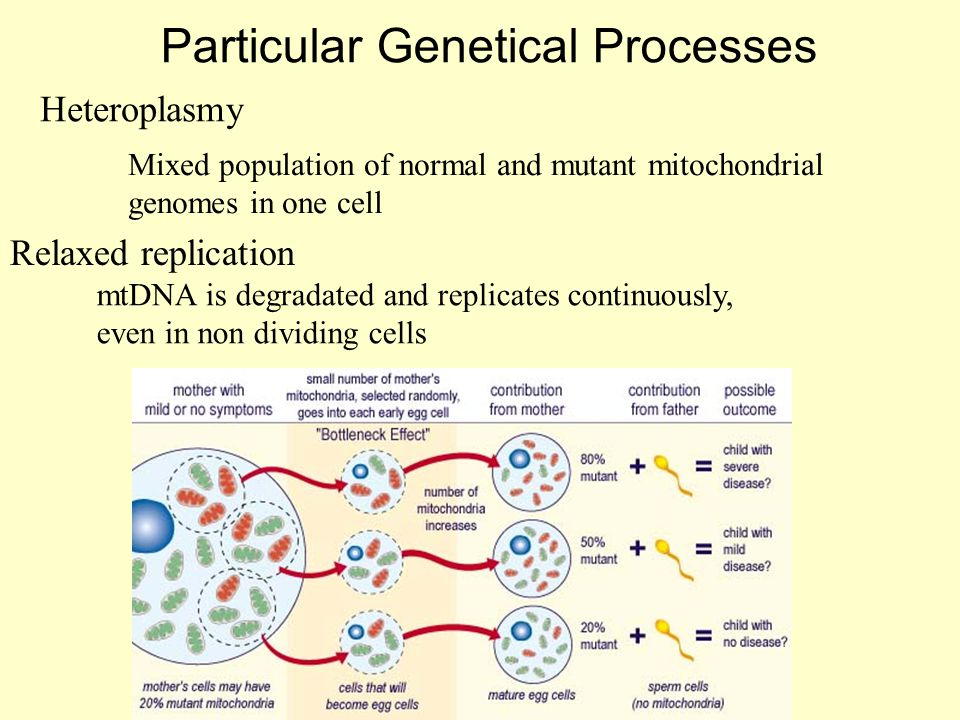 Particular Genetical Processes