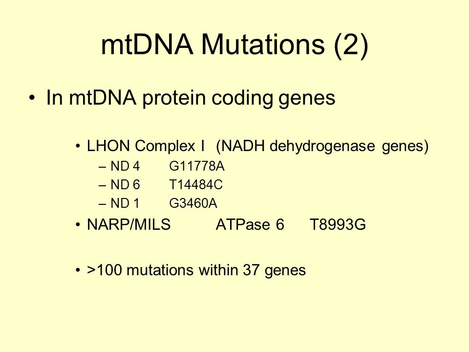 mtDNA Mutations (2) In mtDNA protein coding genes