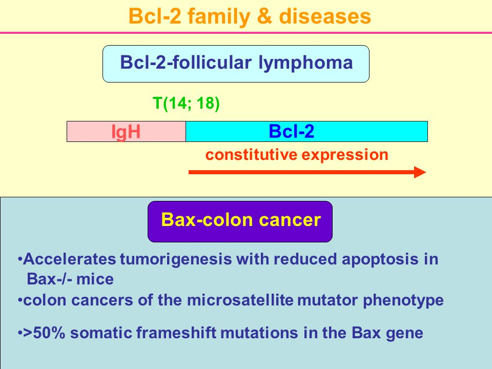 Bcl-2 family & diseases Bcl-2-follicular lymphoma Bcl-2 IgH