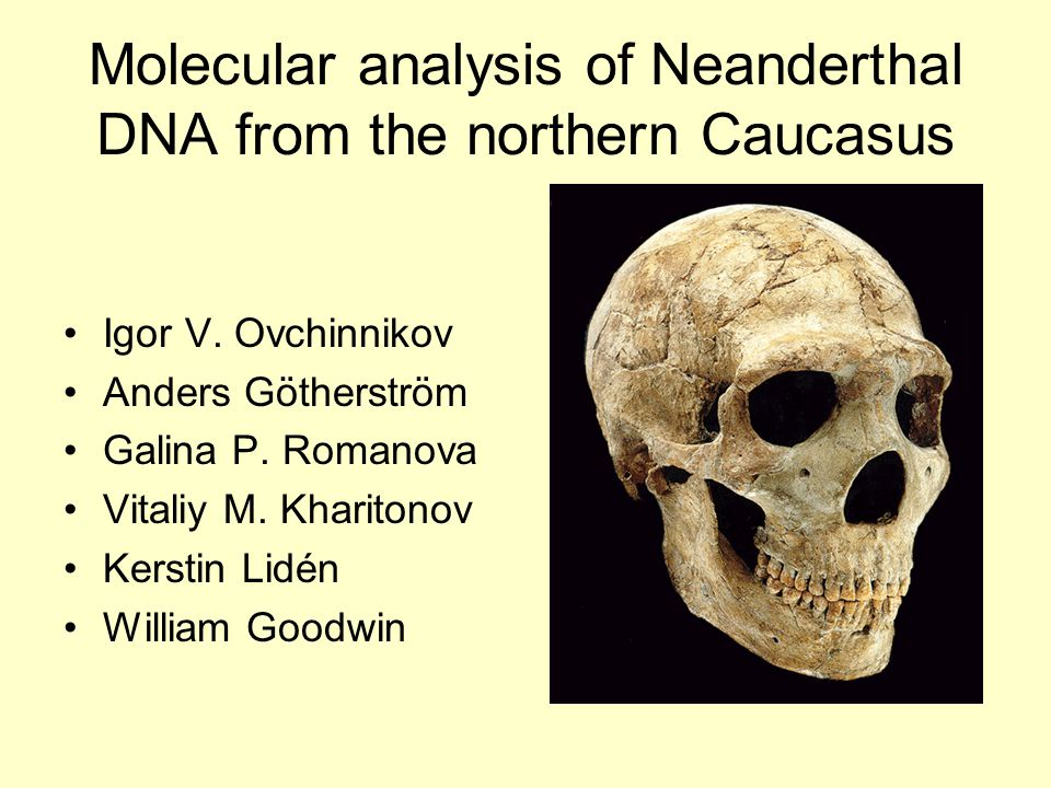 Molecular analysis of Neanderthal DNA from the northern Caucasus