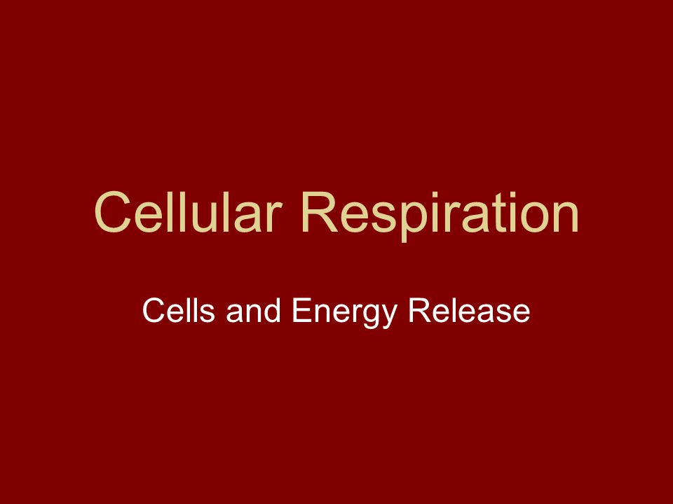Cells and Energy Release