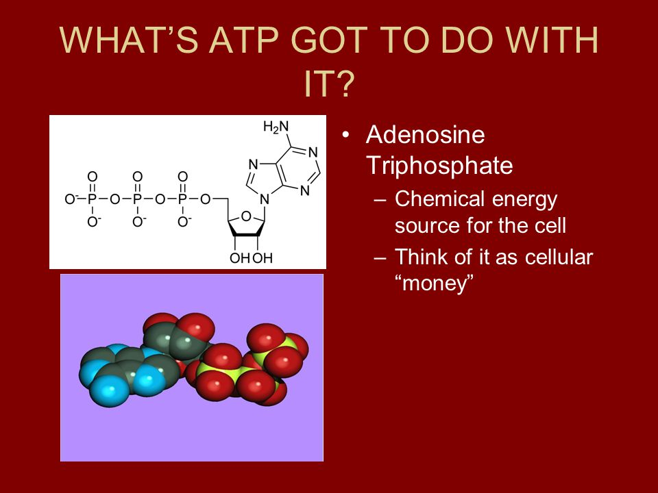 WHAT'S ATP GOT TO DO WITH IT