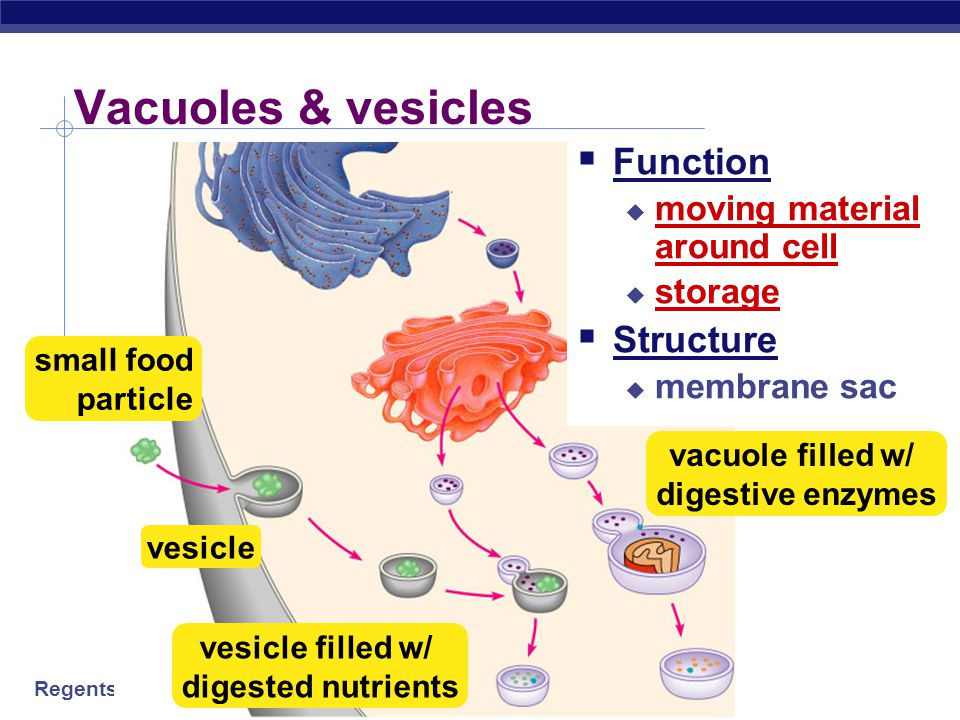 Vacuoles & vesicles Function Structure moving material around cell