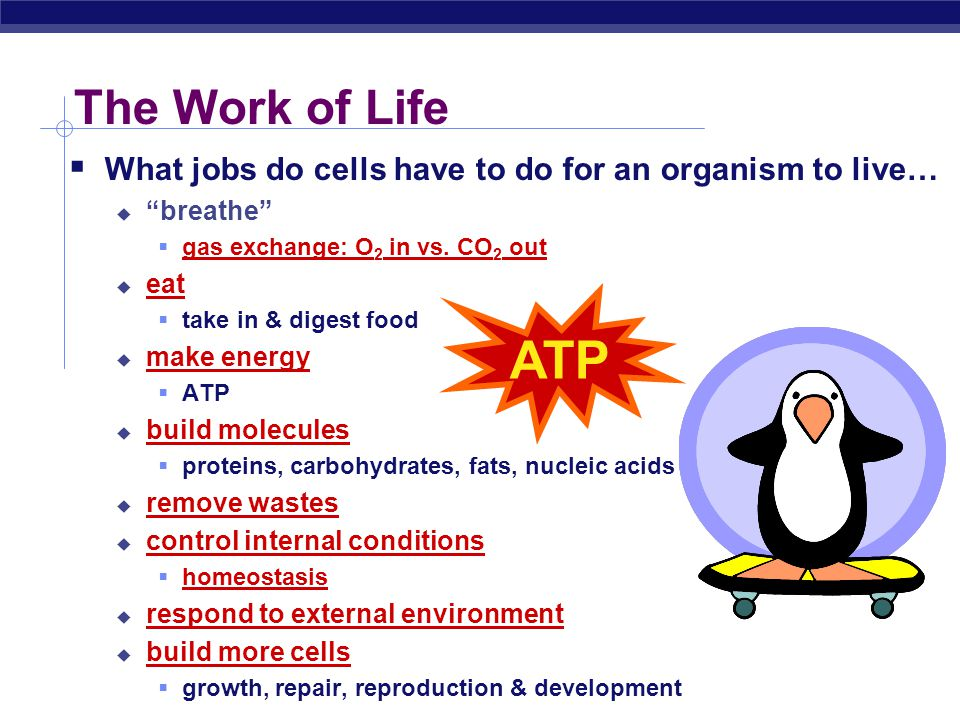 The Work of Life What jobs do cells have to do for an organism to live… breathe gas exchange: O2 in vs. CO2 out.