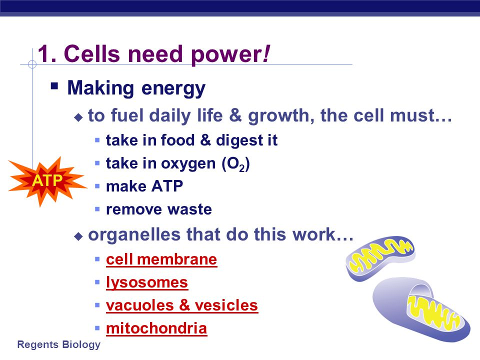 1. Cells need power! Making energy
