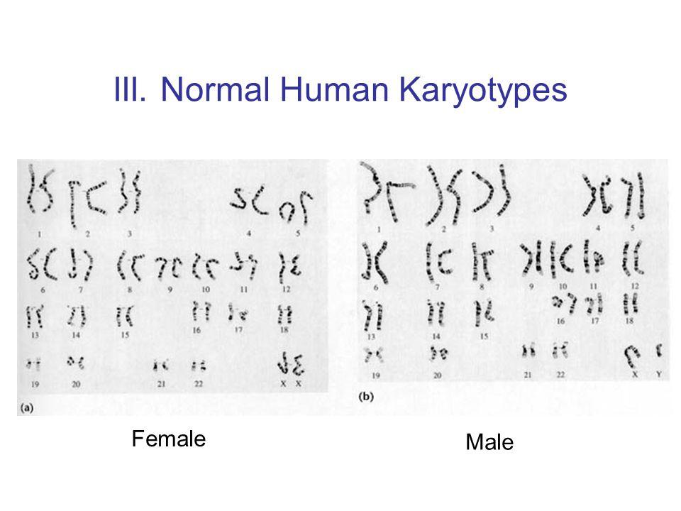 III. Normal Human Karyotypes