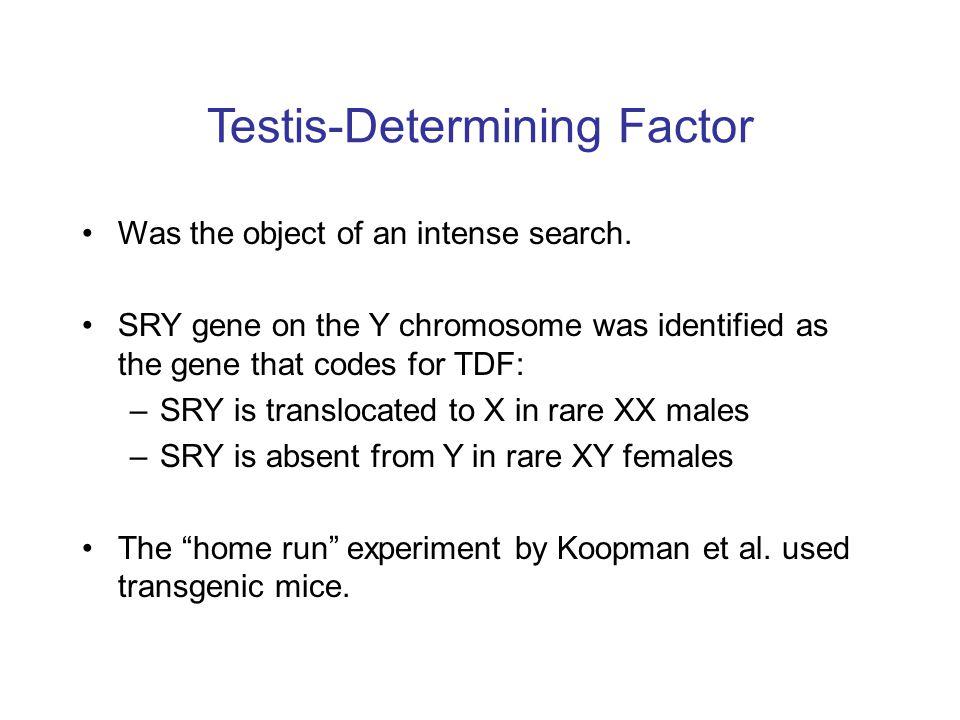 Testis-Determining Factor