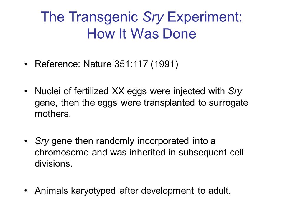 The Transgenic Sry Experiment: How It Was Done
