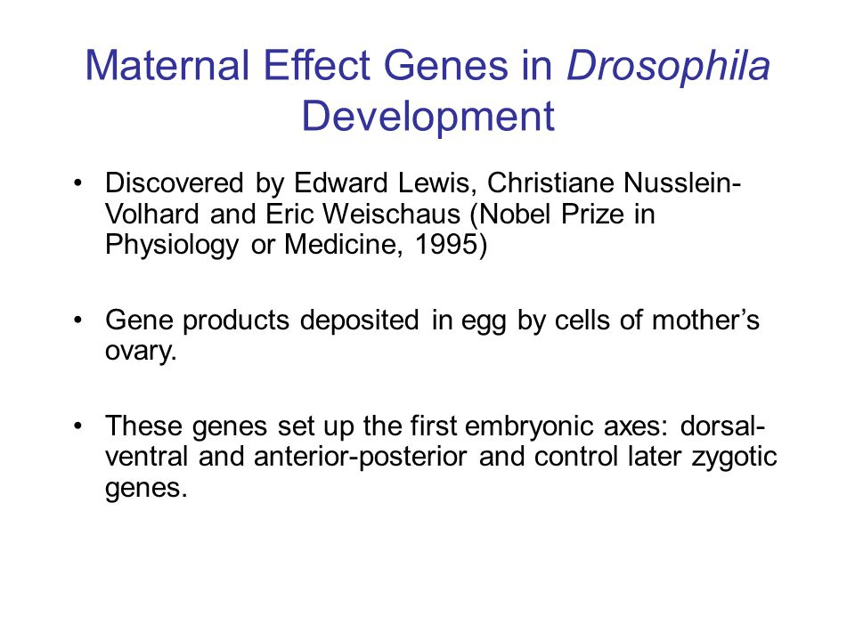 Maternal Effect Genes in Drosophila Development