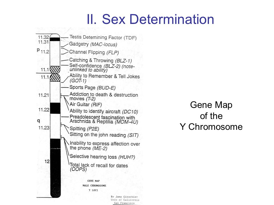 Gene Map of the Y Chromosome