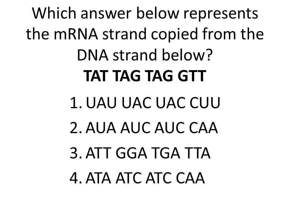 Which answer below represents the mRNA strand copied from the DNA strand below TAT TAG TAG GTT