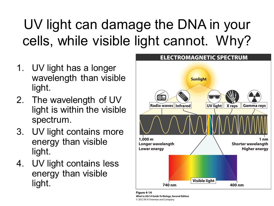UV light can damage the DNA in your cells, while visible light cannot