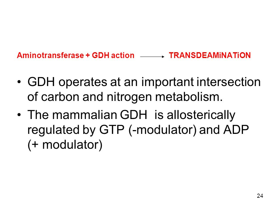 Aminotransferase + GDH action TRANSDEAMiNATiON