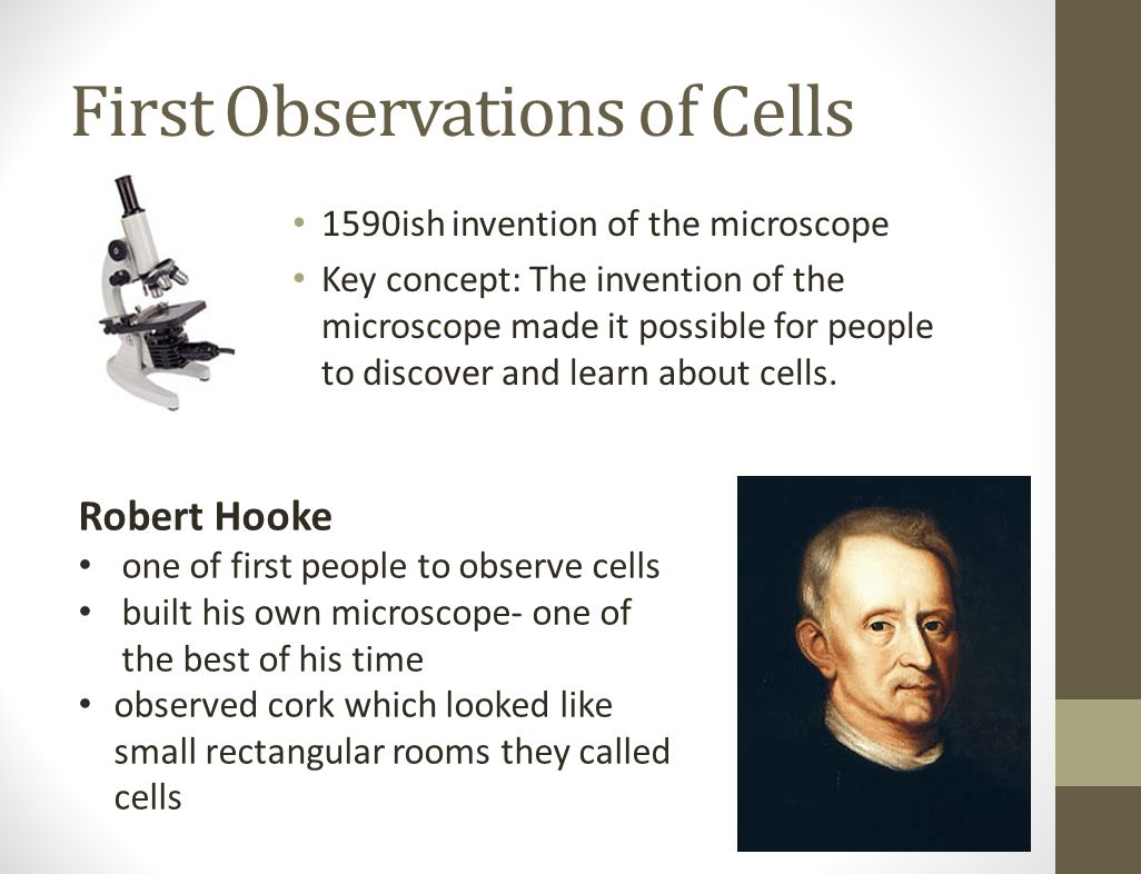 An Overview of Cells Key concept: Cells are the basic units of structure and function in living things.