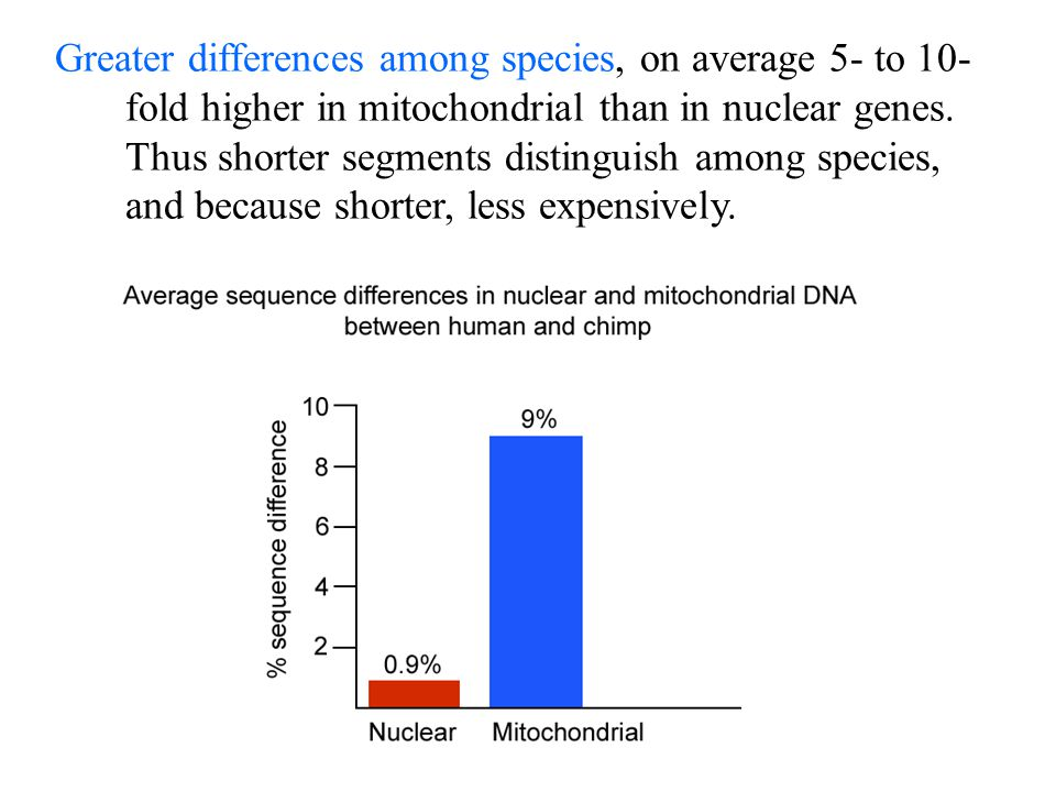 Greater differences among species, on average 5- to 10-fold higher in mitochondrial than in nuclear genes.