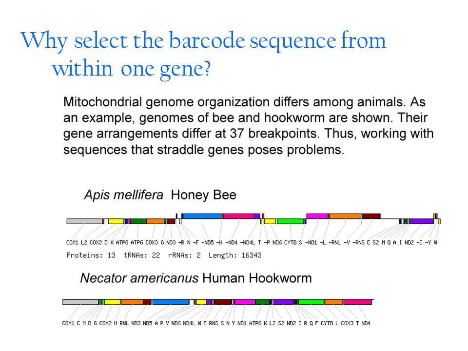 Why select the barcode sequence from within one gene
