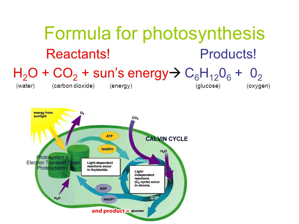 Formula for photosynthesis