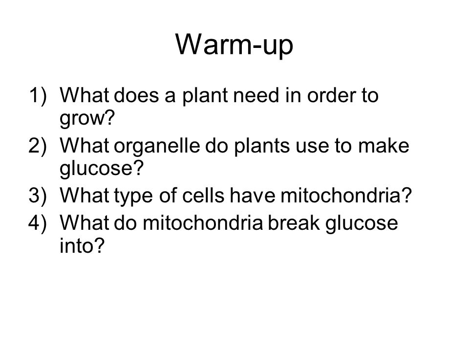 Warm-up What does a plant need in order to grow