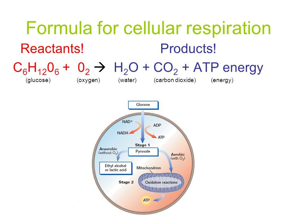 Formula for cellular respiration