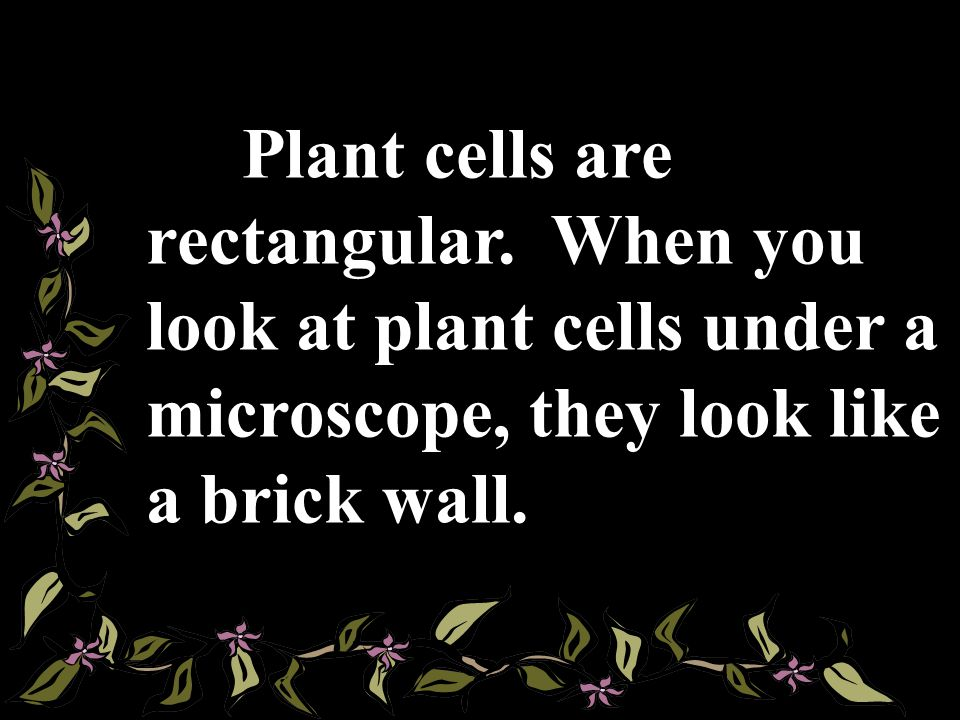 Plant cells are rectangular