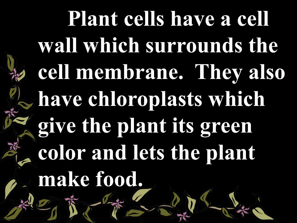 Plant cells have a cell wall which surrounds the cell membrane