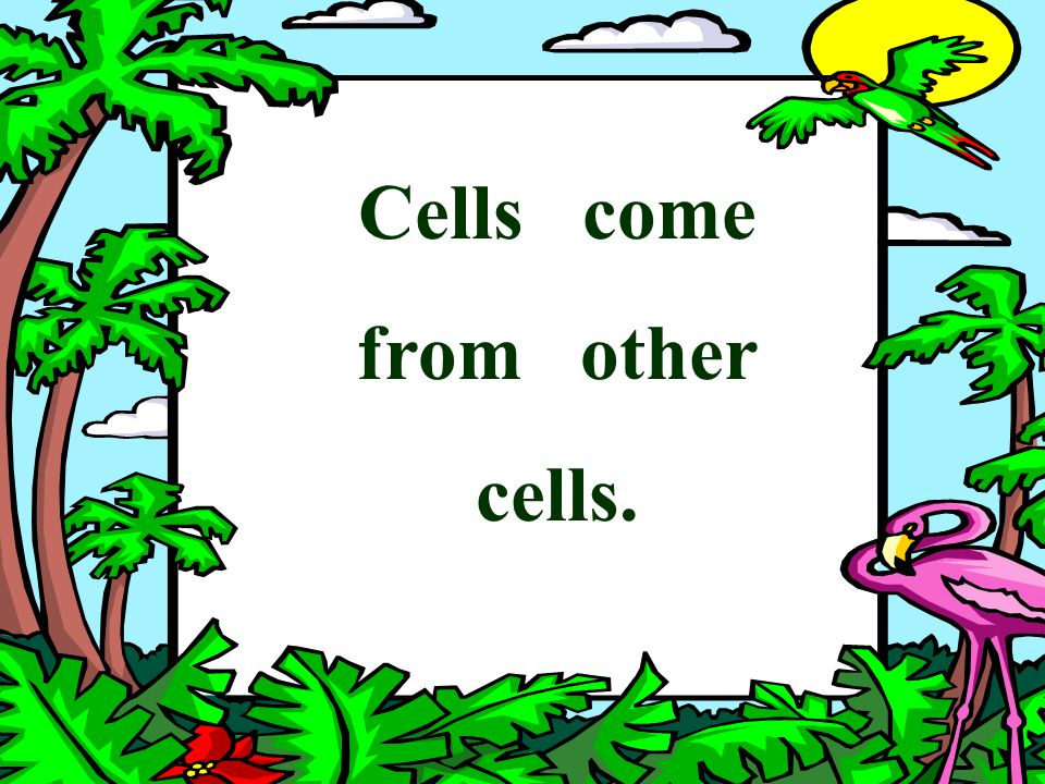 Cells come from other cells.