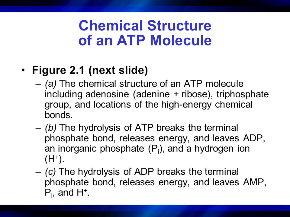Chemical Structure of an ATP Molecule
