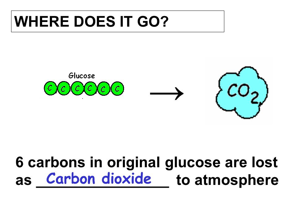 WHERE DOES IT GO. → 6 carbons in original glucose are lost as ________________ to atmosphere.