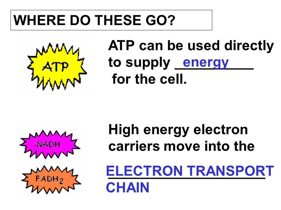 WHERE DO THESE GO ATP can be used directly to supply __________ for the cell. High energy electron carriers move into the.