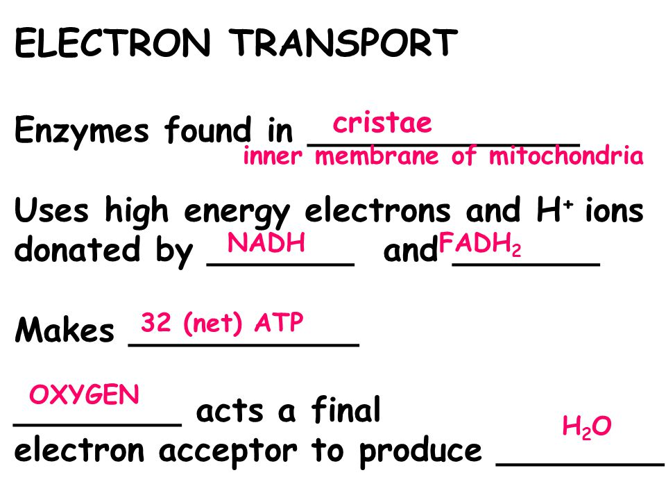 ELECTRON TRANSPORT Enzymes found in _____________