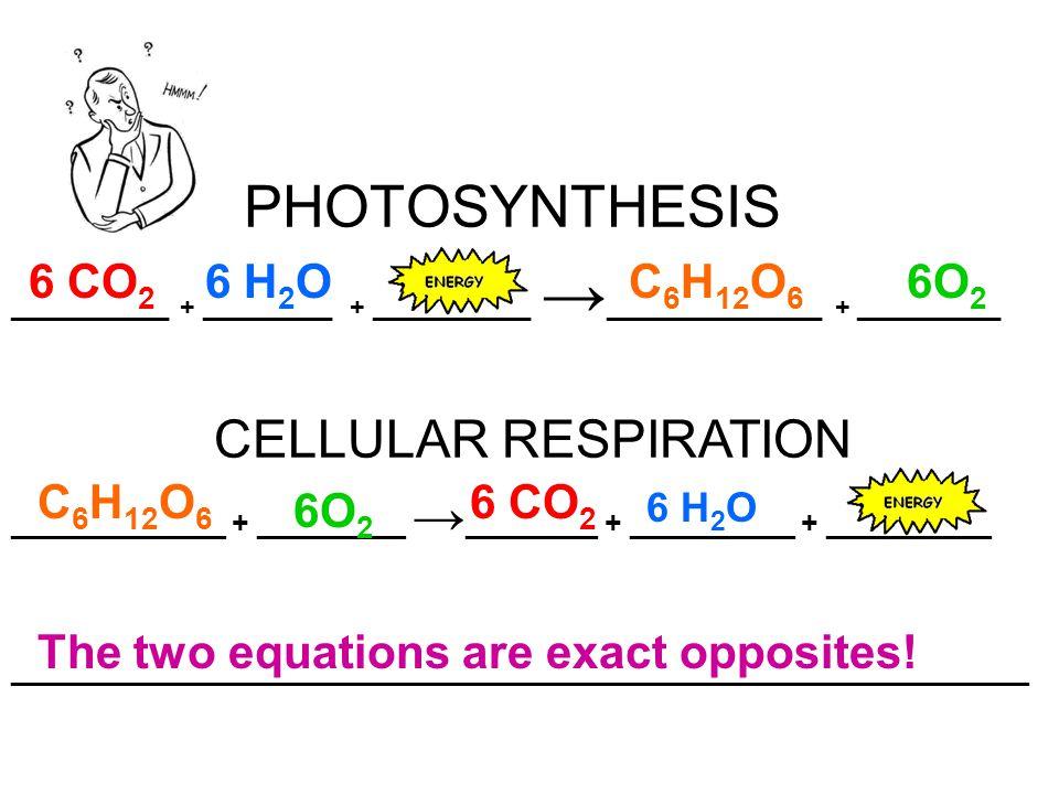 PHOTOSYNTHESIS CELLULAR RESPIRATION 6 CO2 6 H2O C6H12O6 6O2 C6H12O6