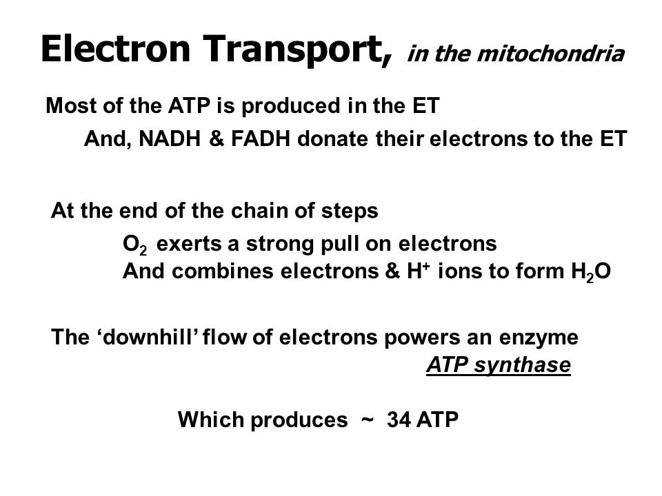 Electron Transport, in the mitochondria