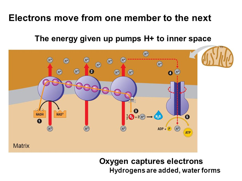 Electrons move from one member to the next