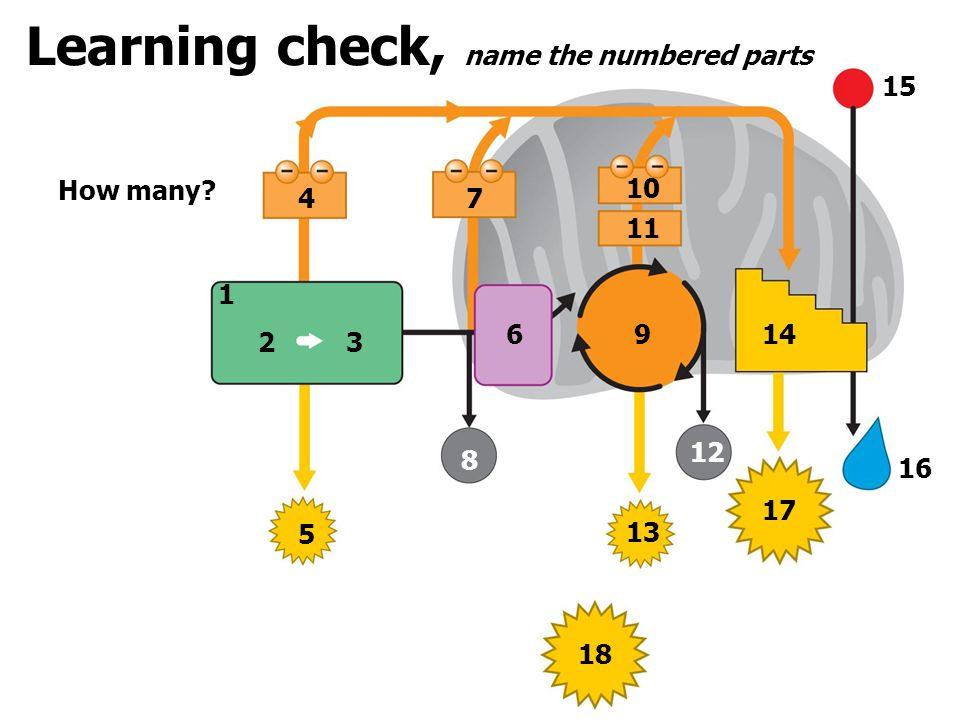 Learning check, name the numbered parts