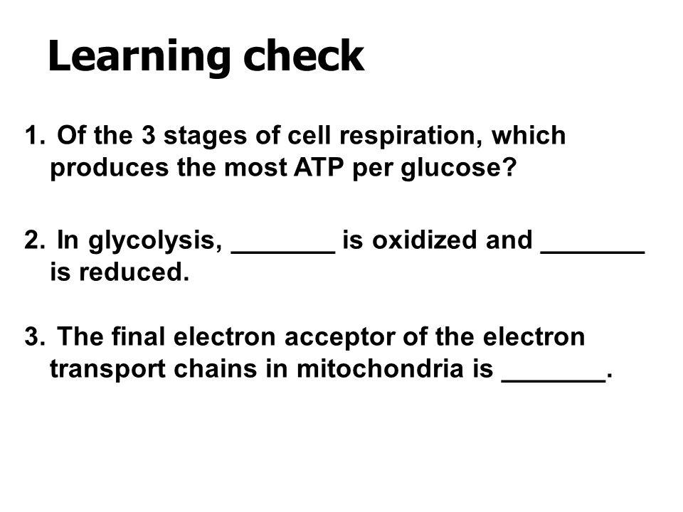 Learning check Of the 3 stages of cell respiration, which produces the most ATP per glucose