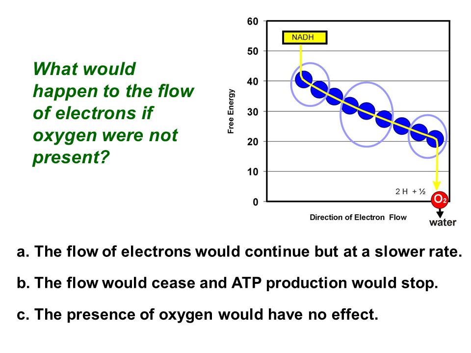 What would happen to the flow of electrons if oxygen were not present