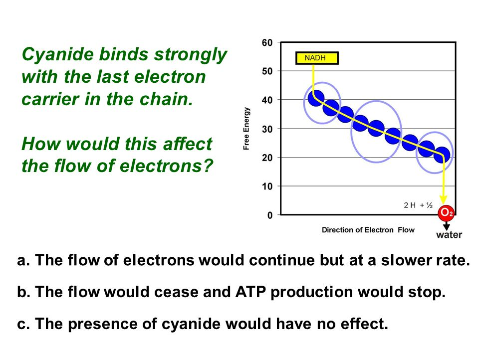 Cyanide binds strongly with the last electron carrier in the chain.
